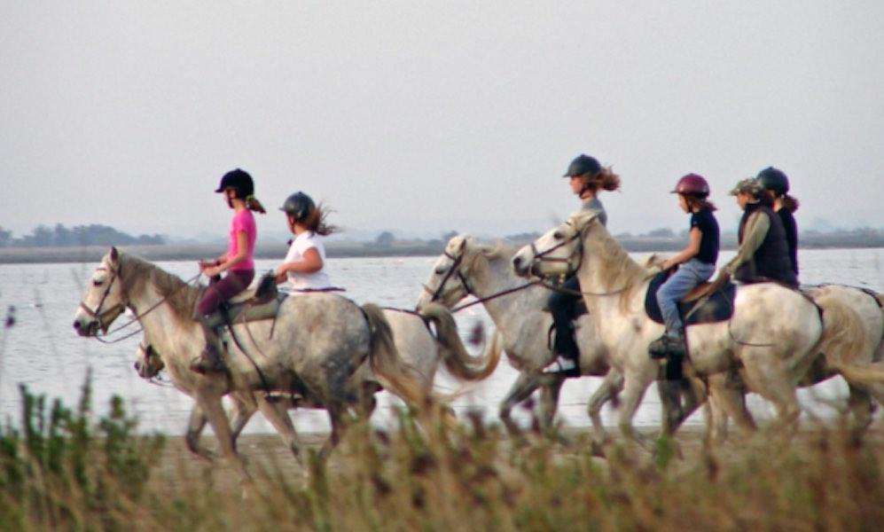 équitation Camargue